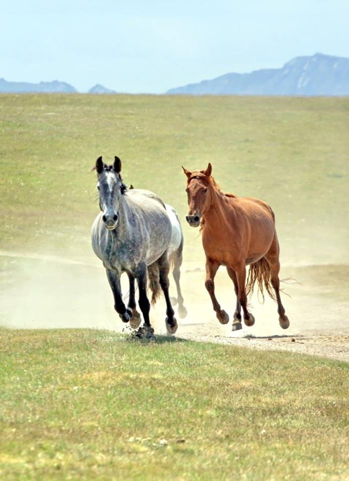 horses by vlad ushakov
