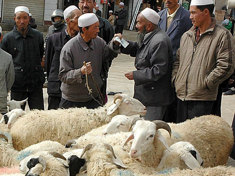 haggling for sheep