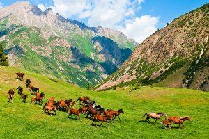 Kyrgyzstan-Turizm-ZHai-loo-Loshadi