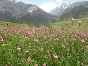 west_of_tajikistan__termez_1024x768_df5